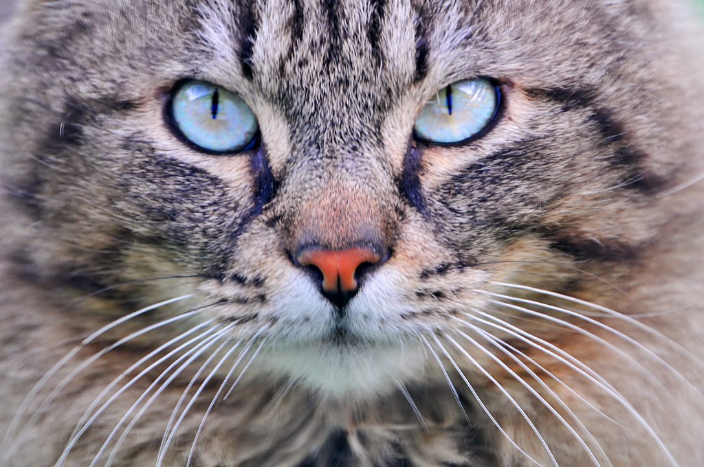 blue eyes photo