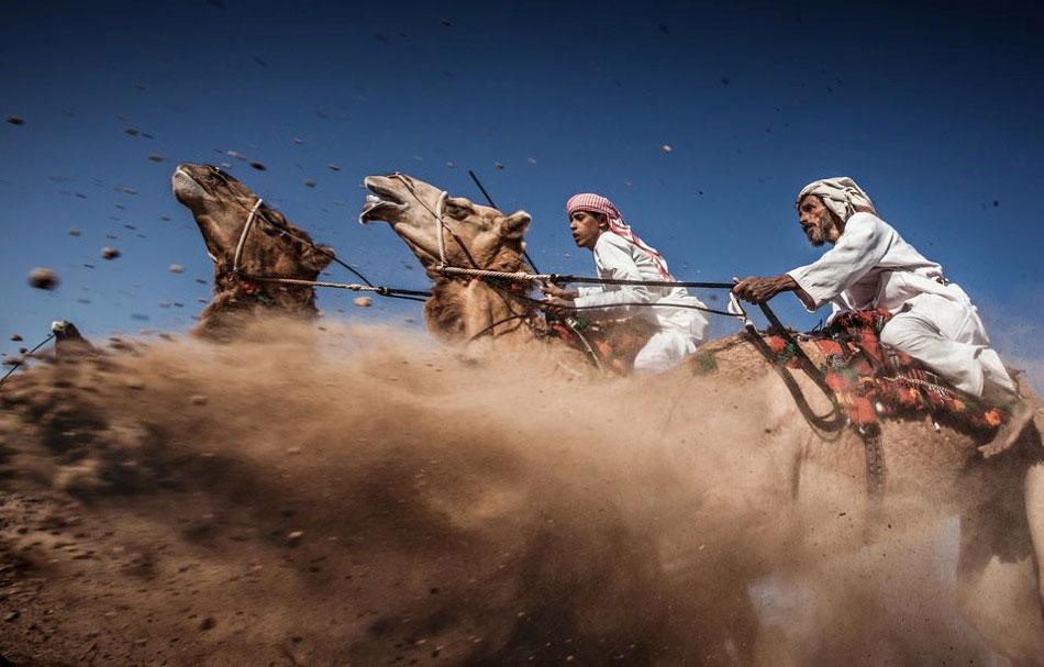 3-Camel-Ardah