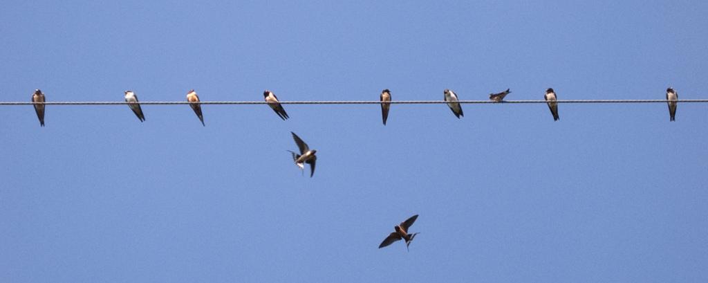 bird electric photo