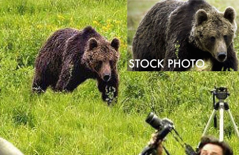 adevarat-fotografii-care-fug-de-urs