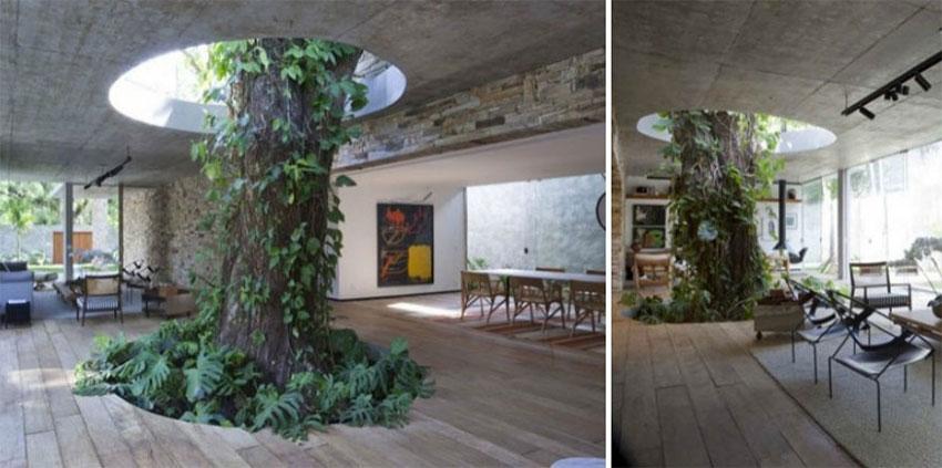 copac-in-centrul-camerei