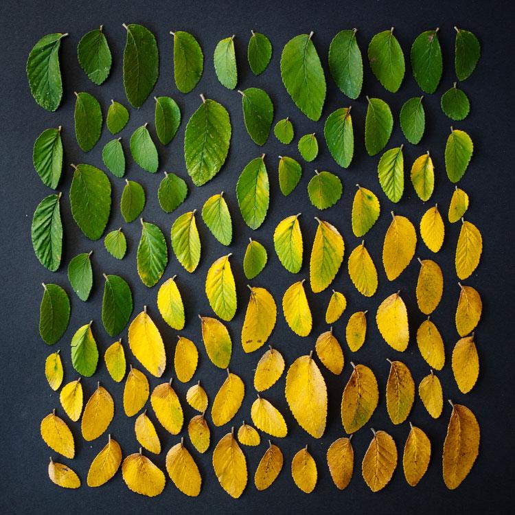 emily-blincoe-obiecte-aranjate-frumos-07