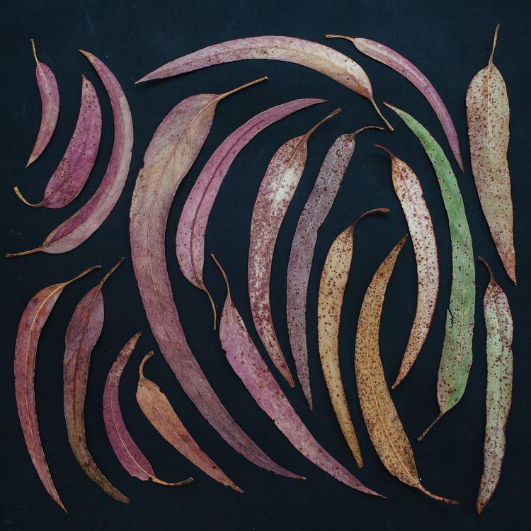 emily-blincoe-obiecte-aranjate-frumos-09