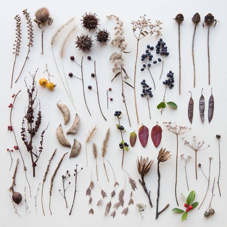 emily-blincoe-obiecte-aranjate-frumos-18