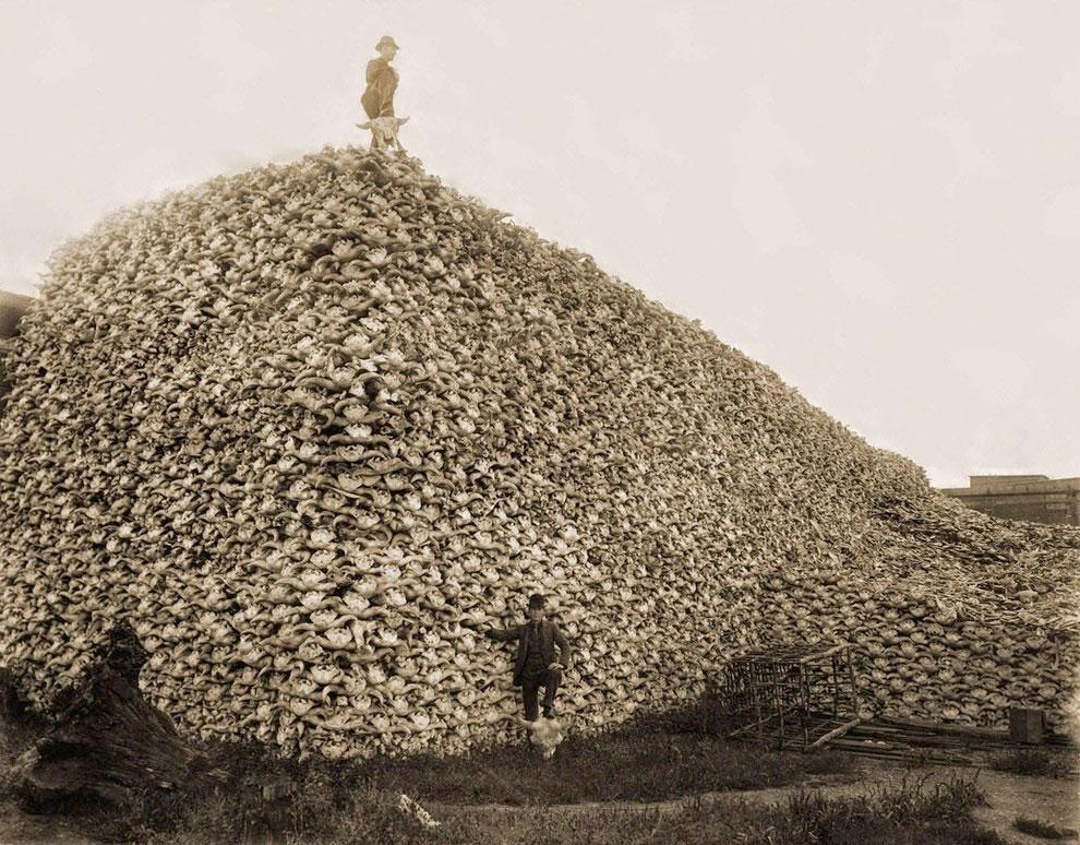 exterminarea-bizonilor-sua