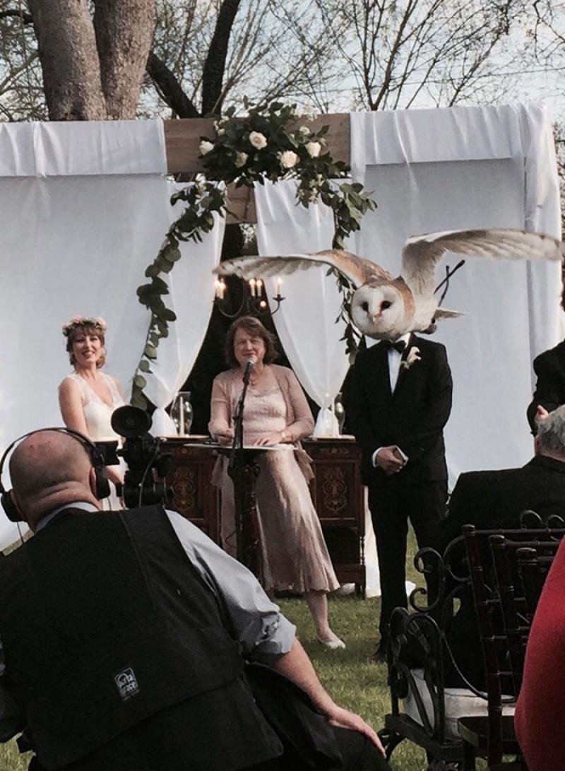 nunta-bufnitei