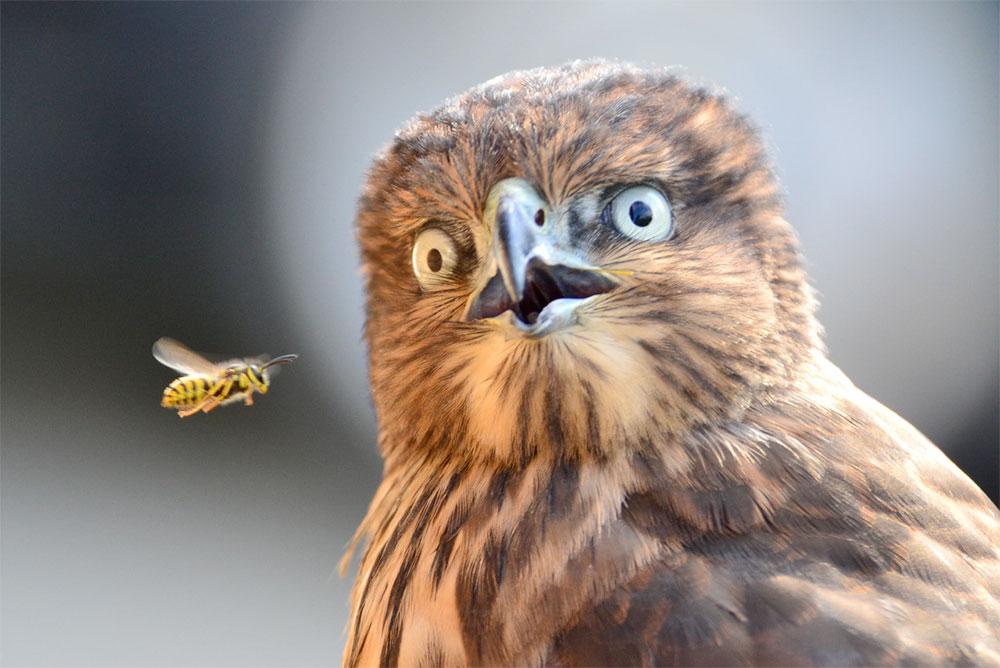 pasare-privire-viespe