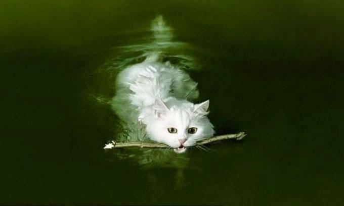 pisica-caine