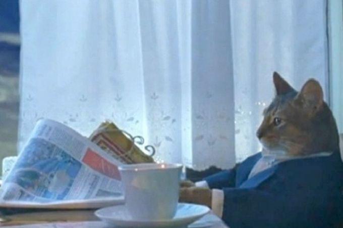pisica-citeste-ziar