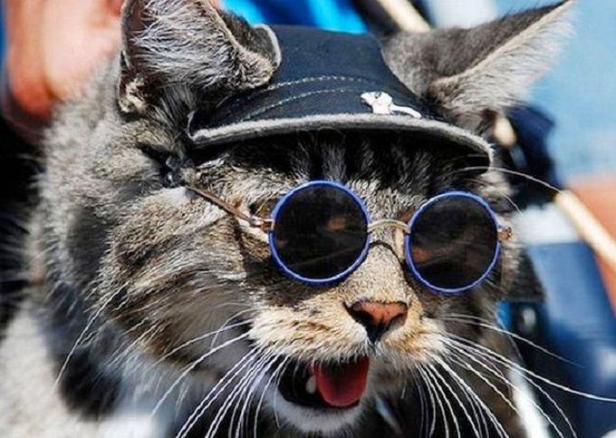 pisica-ochelari-rotunzi