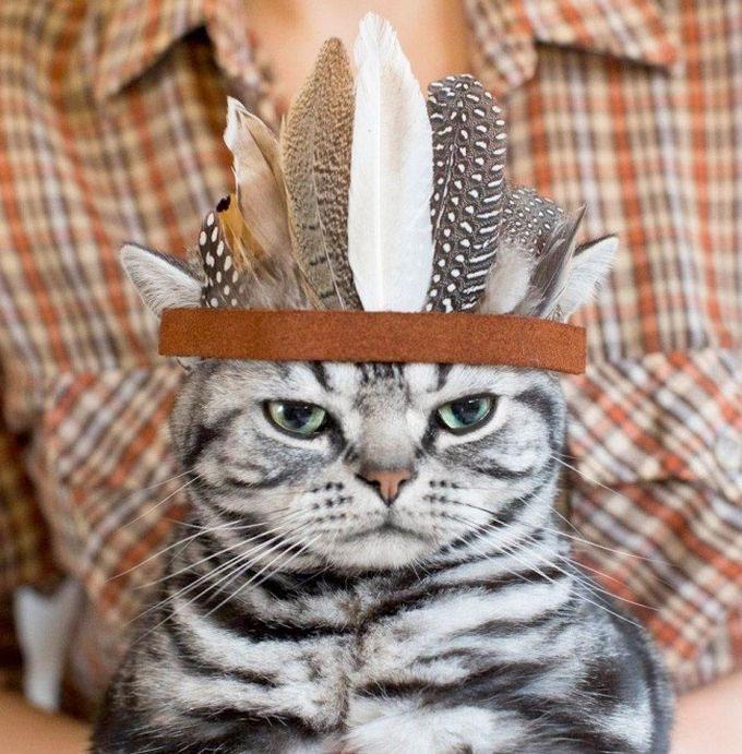pisica-pana-lunga-mutra-trista