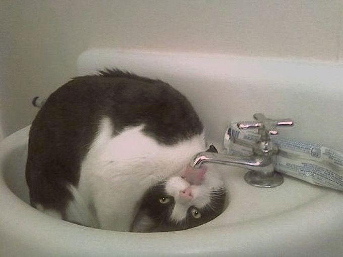 pisica-pregatire-show-talent