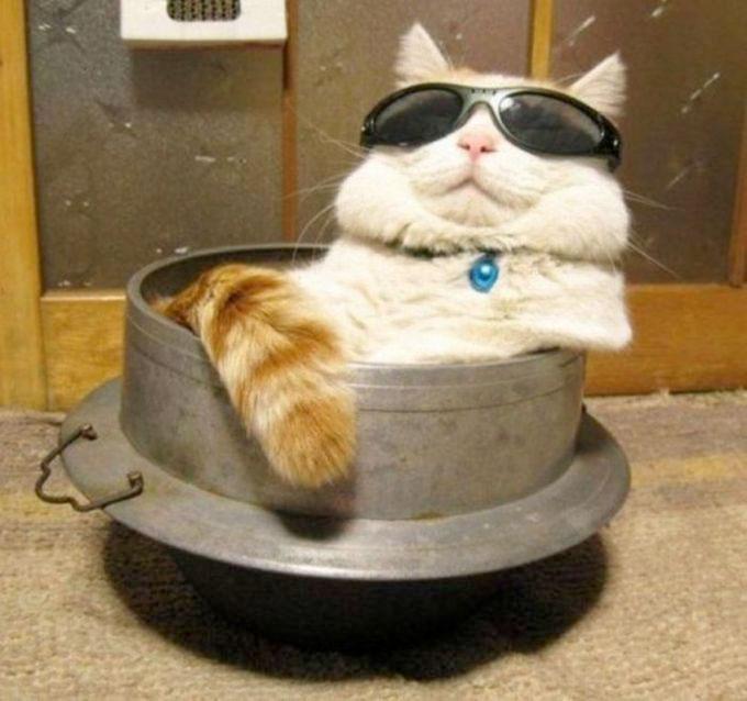 pisica-relaxare