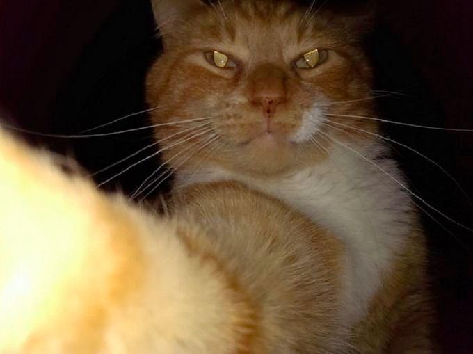 pisica-selfie-nocturn