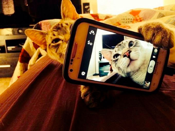 pisica-selfie-telefon