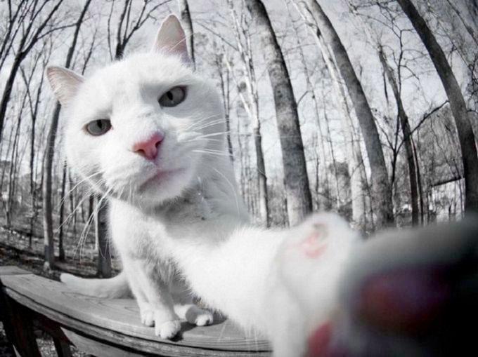 pisica-vrea-camera
