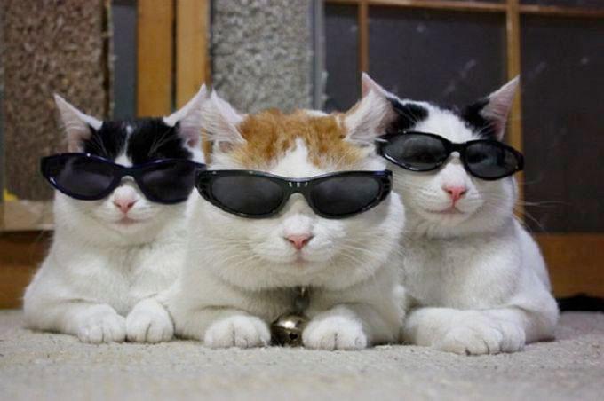 pisici-ochelari-negri
