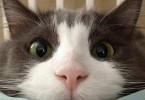16296517485_6887ab185f_cat-hot