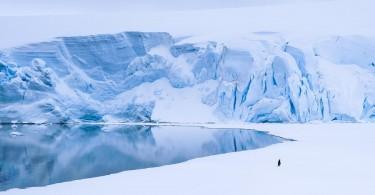 pinguinul-singuratic